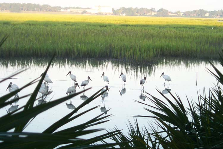 ibis, lowcountry marsh, beaufort architect