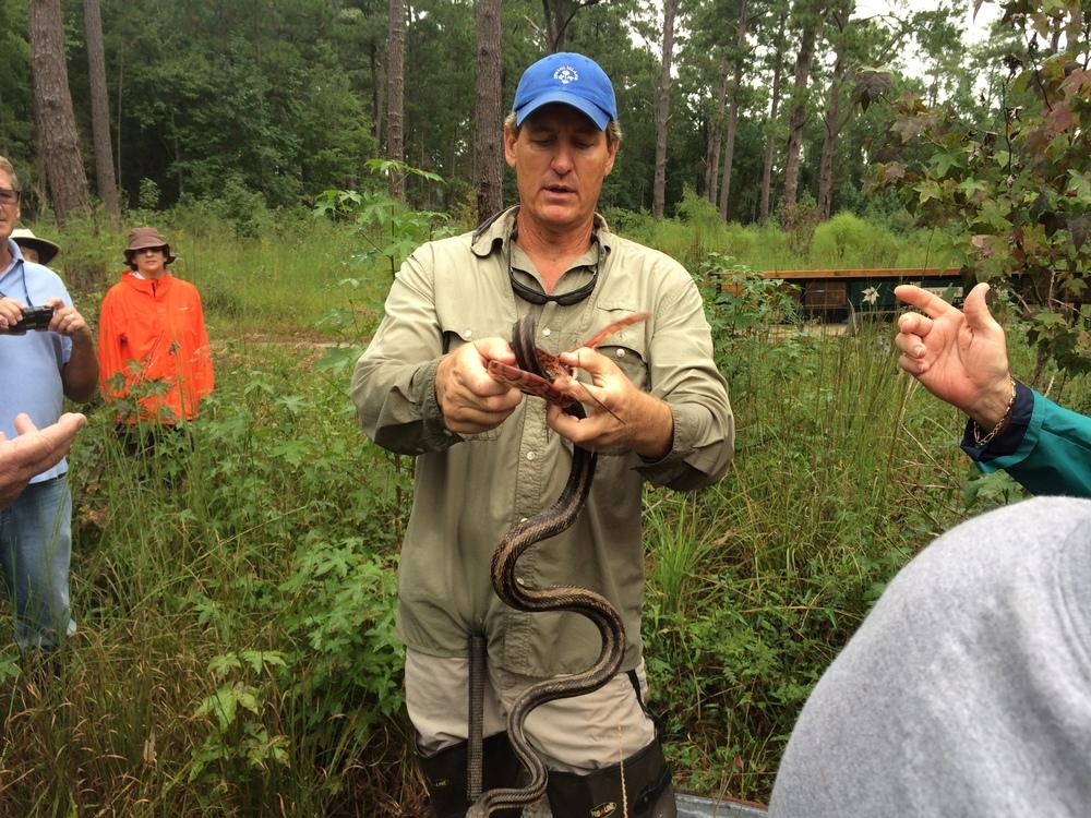 Corn Snake and Rat Snake