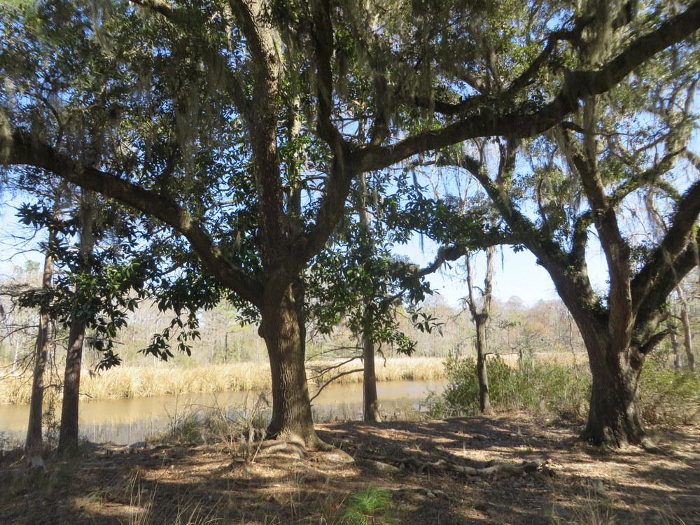 creek-trees.JPG