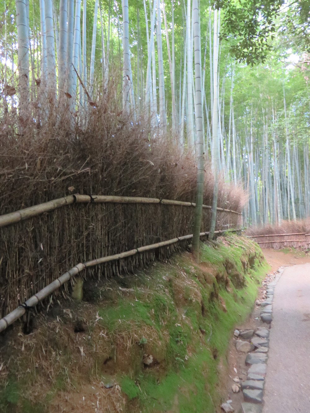 bamboo forest fence.JPG