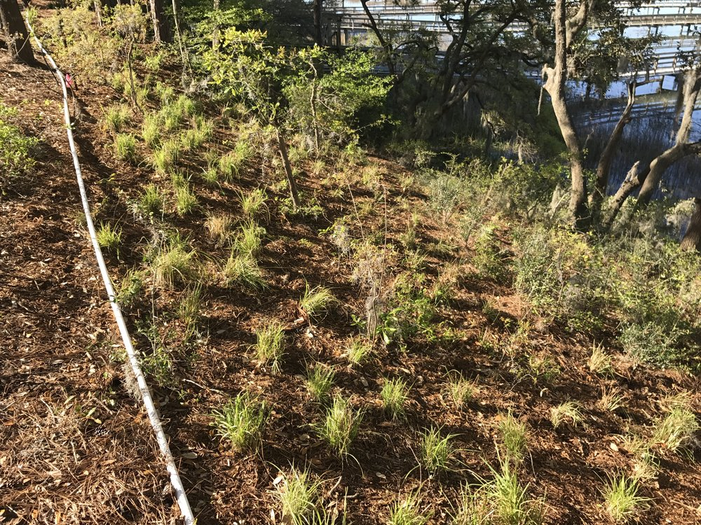 Native grasses have been planted on the bluff, so by the time the owners move in, they will have had time to mature.