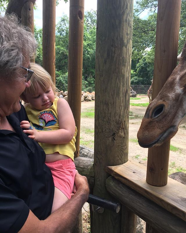 Not sure about the giraffe #riverbankzoo