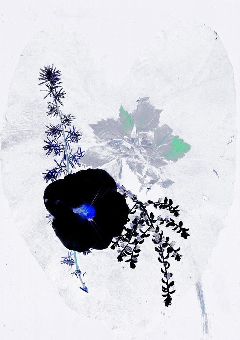 36_fleur-3.jpg