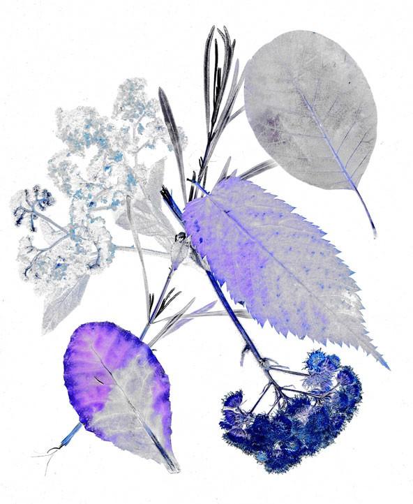 36_fleur-9.jpg