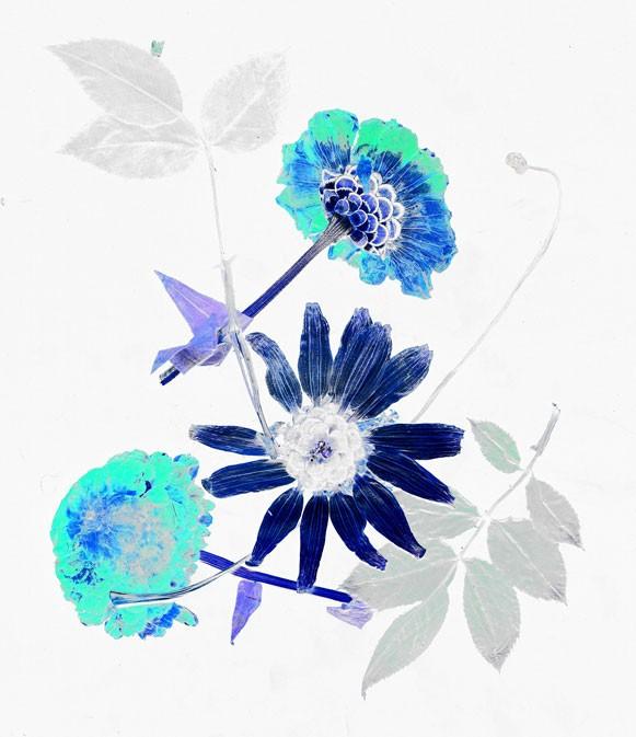 36_fleur-7.jpg