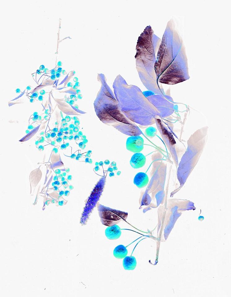 36_fleurs-10.jpg
