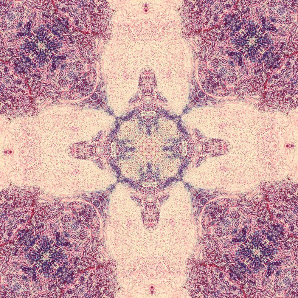 splenic tissue mandala 1.jpg