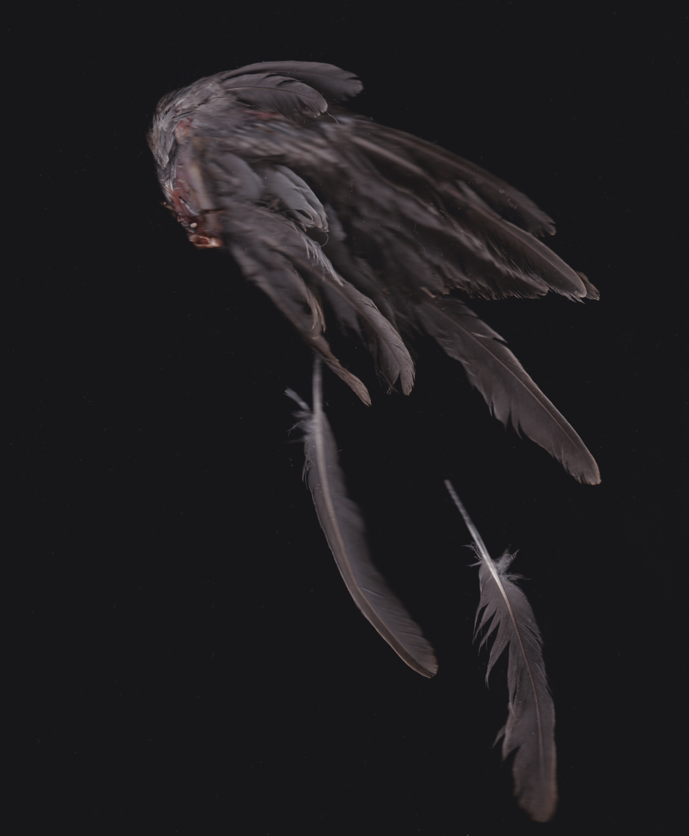 Sarah_Alhussinan_Pigeons_wing.png