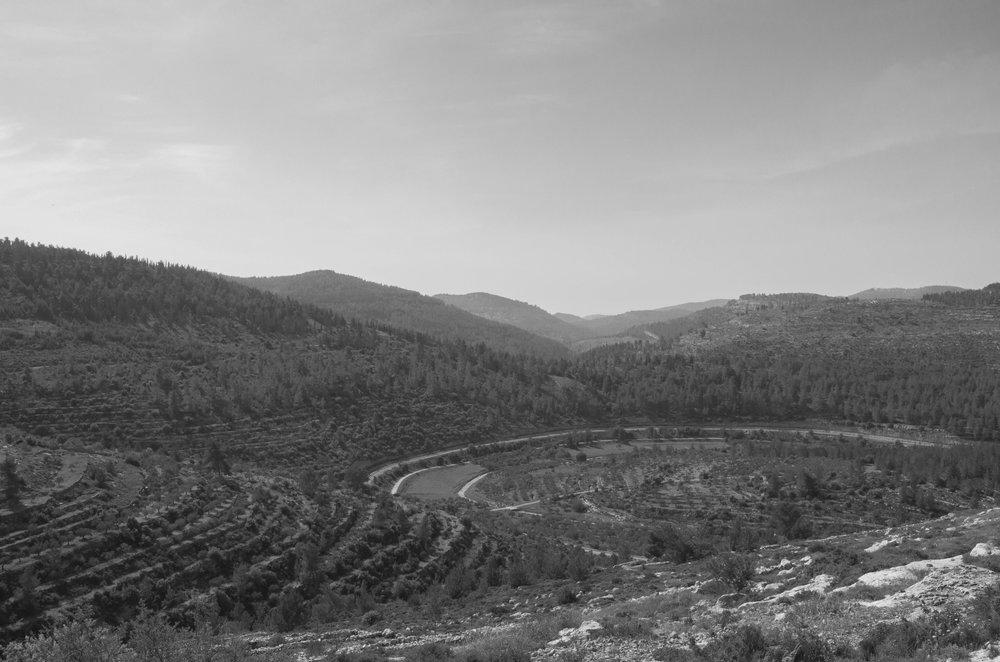Rural mountainous landscape (with urban intervention) in Battir village, 2016