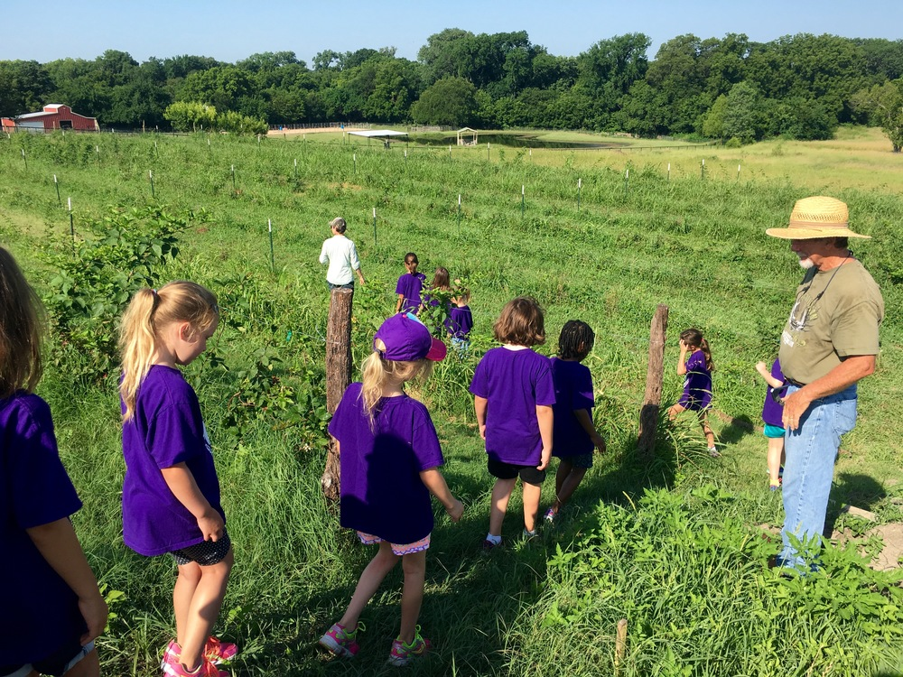 girl scouts at the farm2.jpg