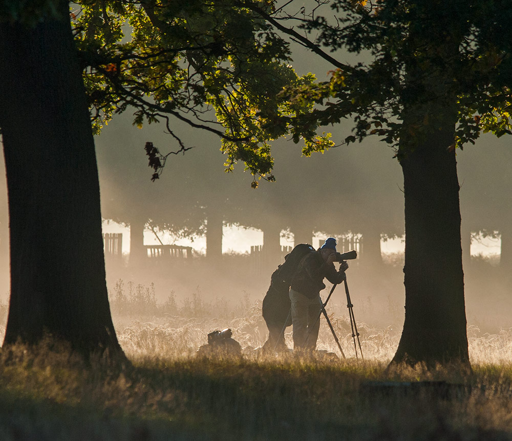 Photographers stalking Deer