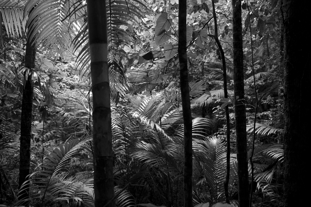 Rainforest, Tobago 2013