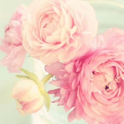 Pink-Peonies.jpg