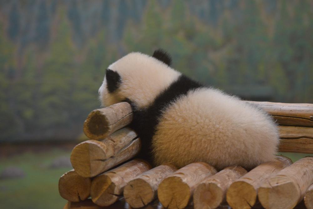 Reading Buddies Zoo Trip-22.jpg