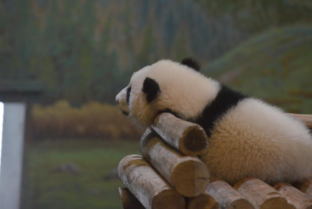 Reading Buddies Zoo Trip-24.jpg