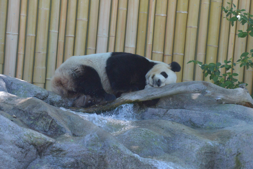 Reading Buddies Zoo Trip-27.jpg
