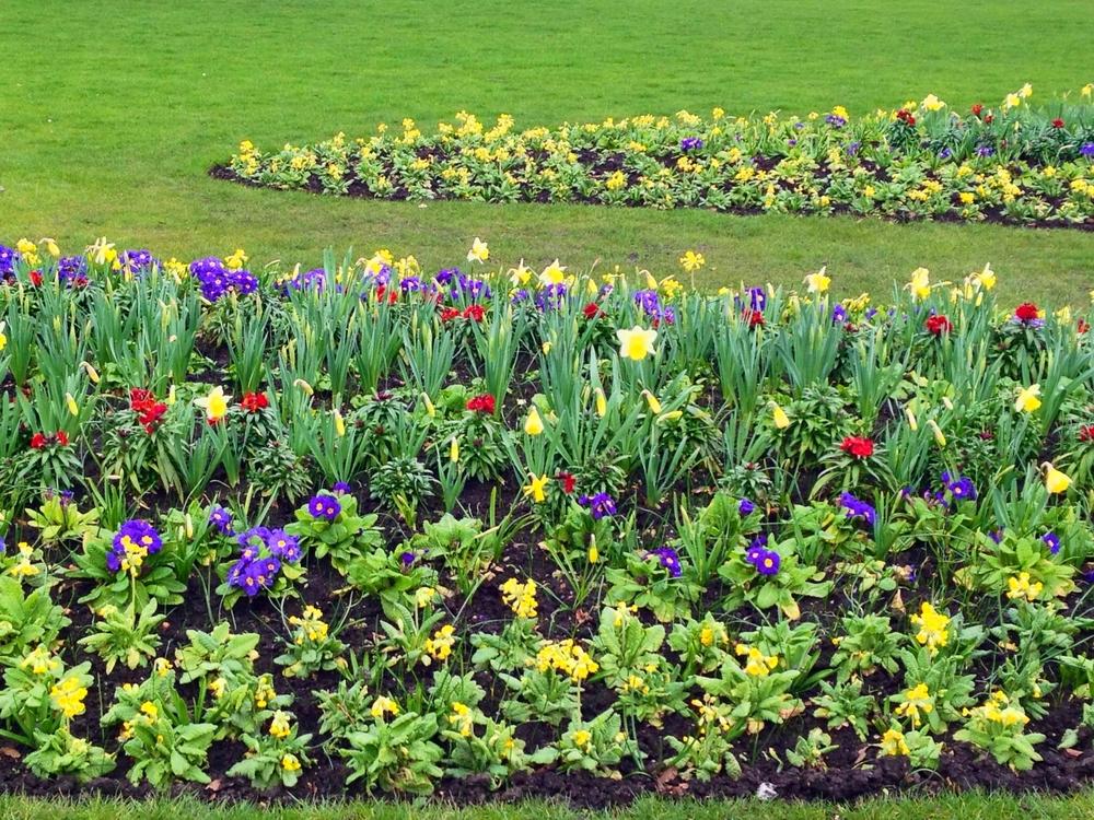 Hyde Park London flowers