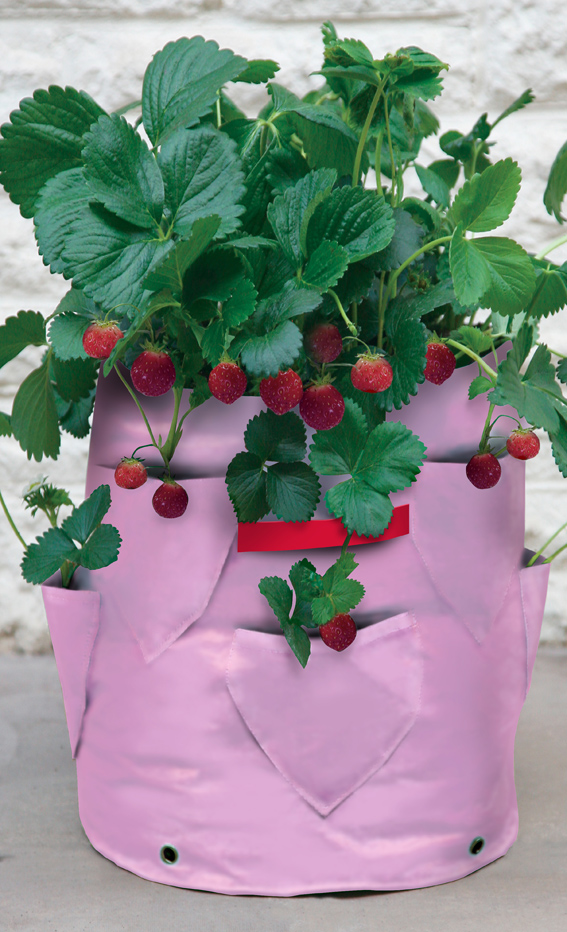 Strawberry & Herb Patio Planter (2).jpg