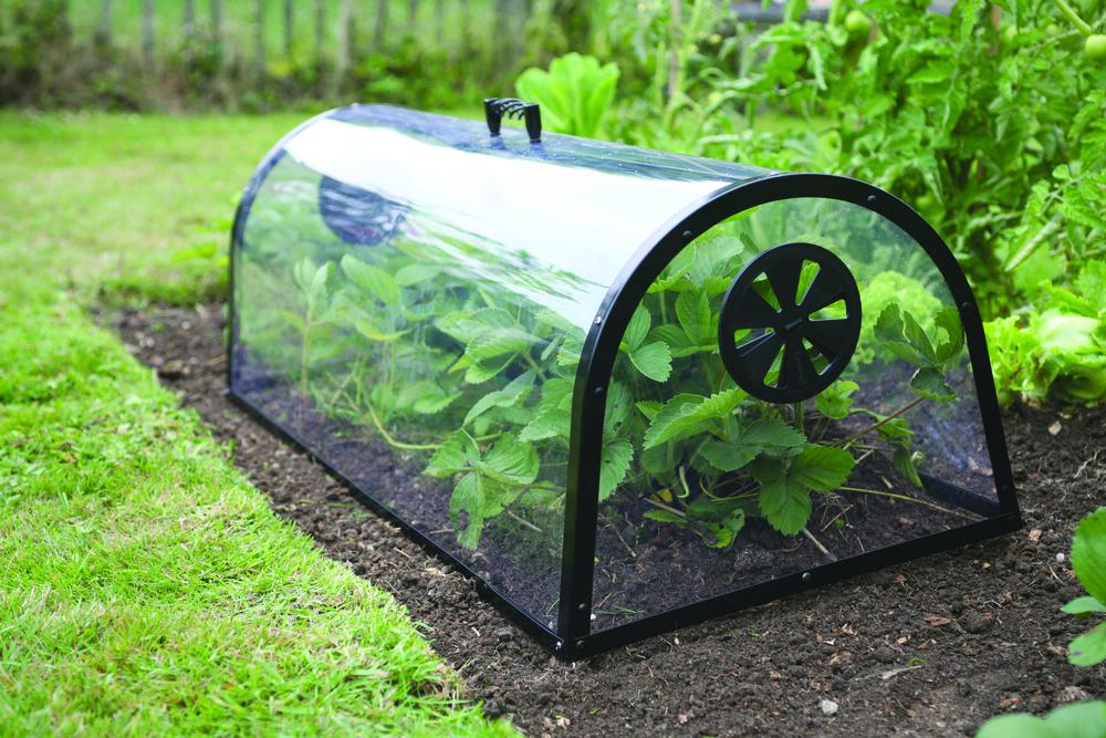 Garden cloches haxnicks gardening products for Garden cloche designs