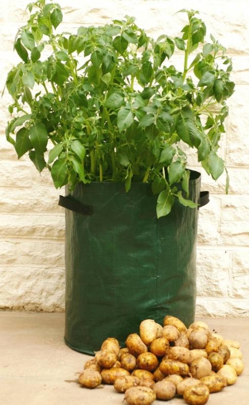 Haxnicks Potato Patio Planter