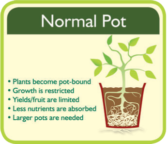 Normal Pot Root System.jpg