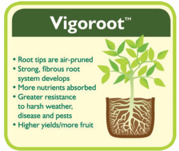 Haxnicks Vigoroot Root System.jpg