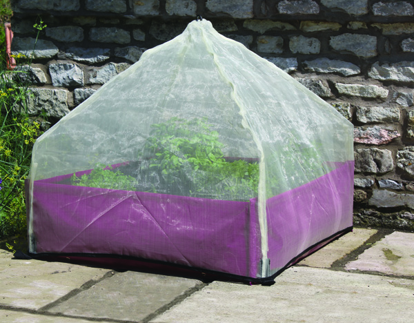 Haxnicks Easy Lantern Cloche Over My First Vegetable Garden.jpg