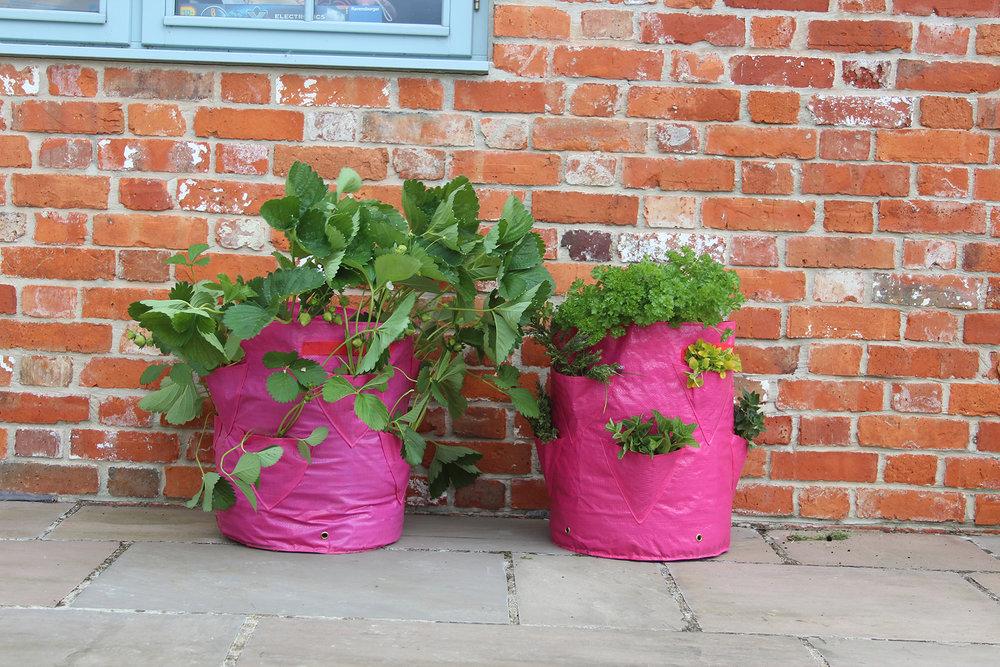 50 1060 Tierra Garden Haxnicks Strawberry Herb Patio Planter In Use Both  WEB
