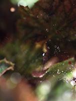 waterdrop2-m.jpg