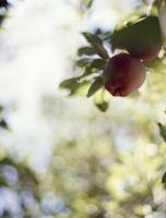apple11-2.jpg