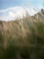grass11.jpg