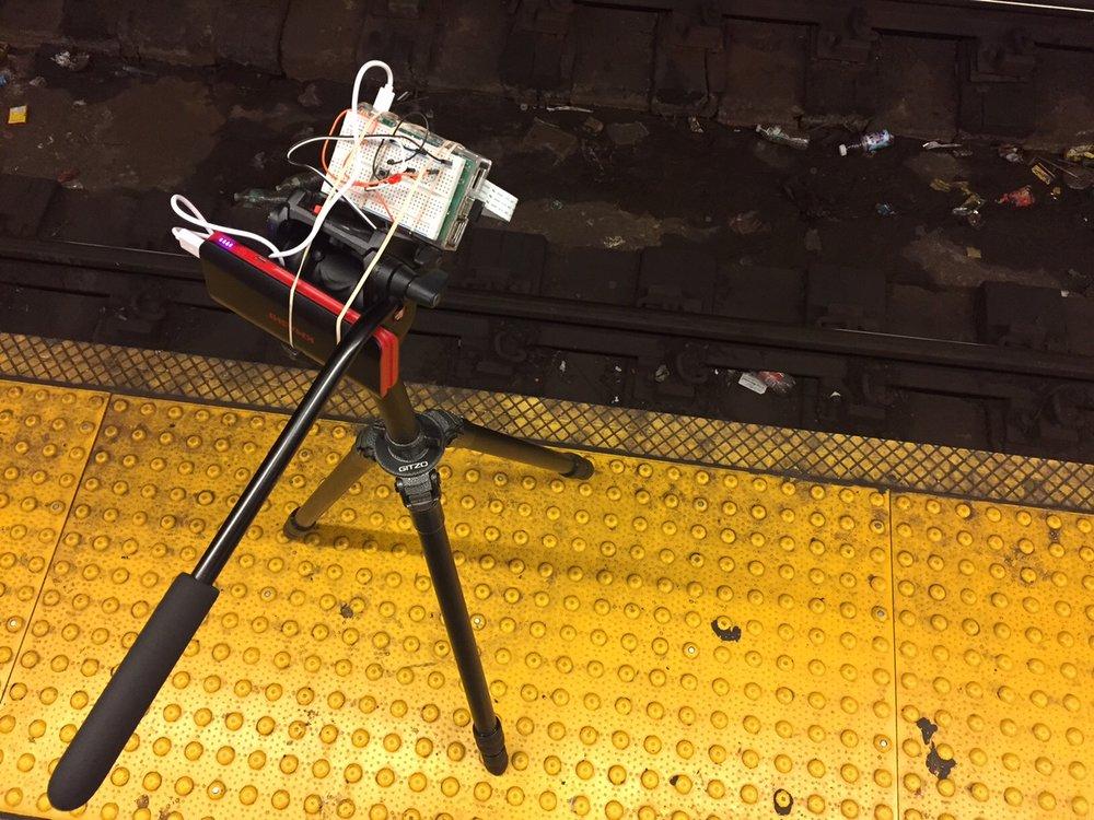 Filming rats