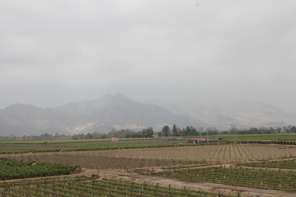 These are the Tacama vineyards with some mountains in the background.