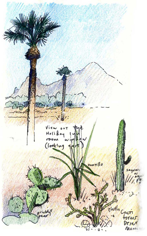 Desert plants, Phoenix.  Felt tip pen and colored pencils.