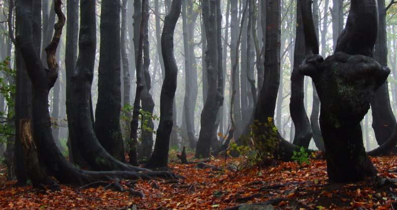 fangorn_forest_by_smagliczka.jpg