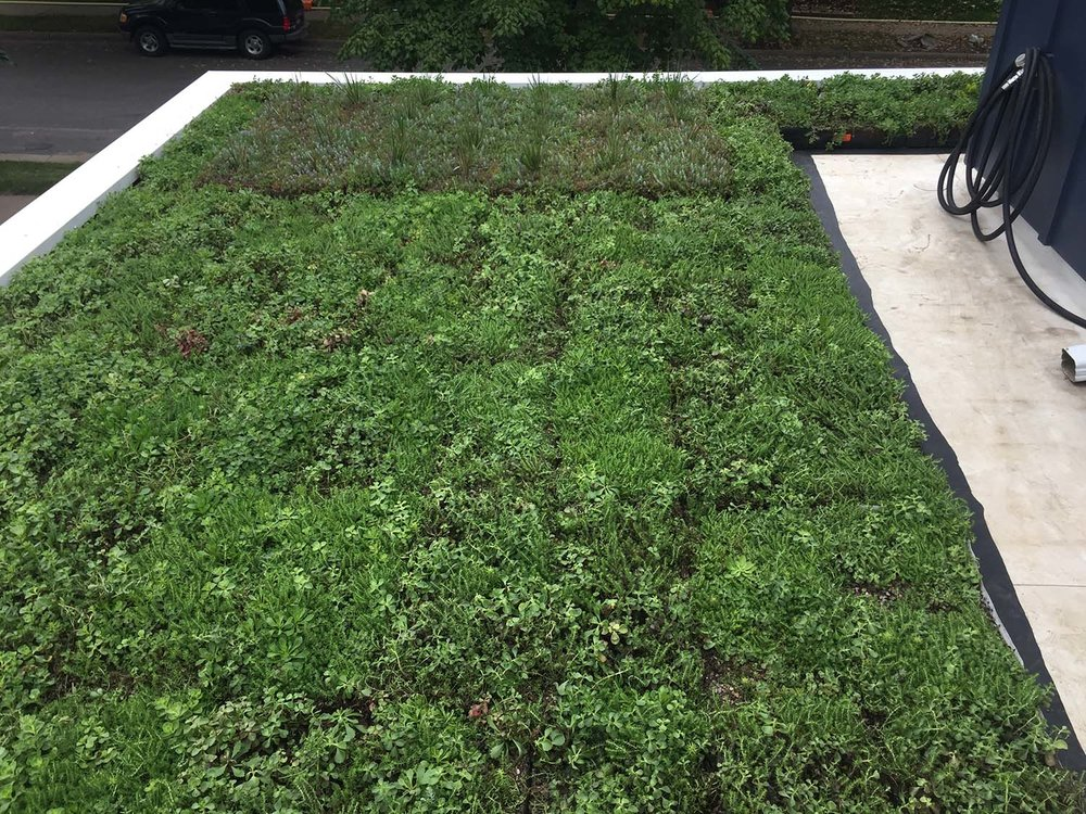 "This 160 sq. ft. installation uses two different module depths (4"" and 6""), with an island of the deeper modules positioned toward the street to allow the Karl Forester grasses to be seen from below.  The entire live roof cost about $3700 from Bachman's, and we did the installation ourselves."
