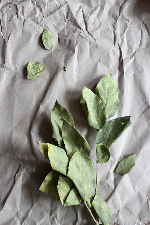 Lemon Leaves (Salal)