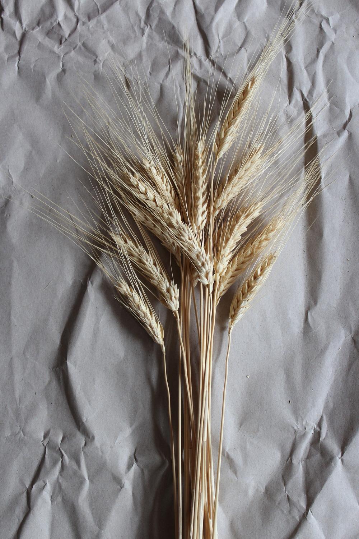 Bearded Wheat