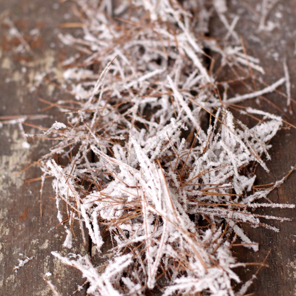 Snowy Pine Needles 02.jpg