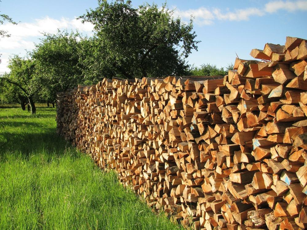 Tree Wood - Pixabay.jpg