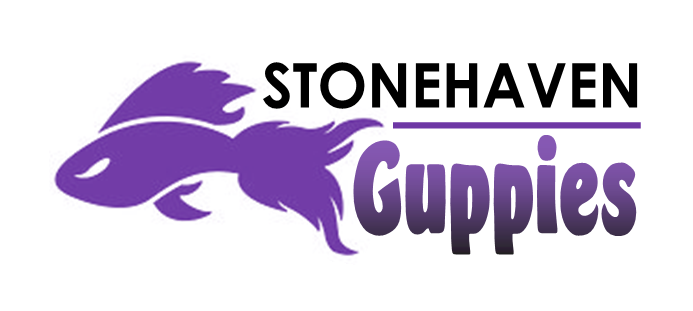 LOGO / Stonehaven Guppies Swim Team