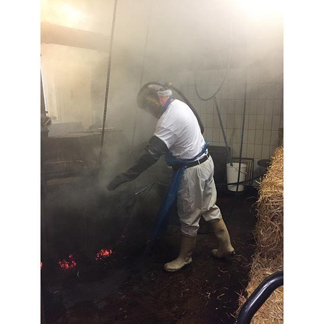 Så kom turen til Løgismose hvor det gamle røgeost-håndværk holdes i hævd. En af de oste med en gammel historie og tilknytning til netop Fyn. I dag fortsat et håndværk på et ellers moderne, mekaniseret mejeri. Røget på havre, som har det højeste indhold af olie og giver en fed røg #kostkbh #ostogko #ostetour
