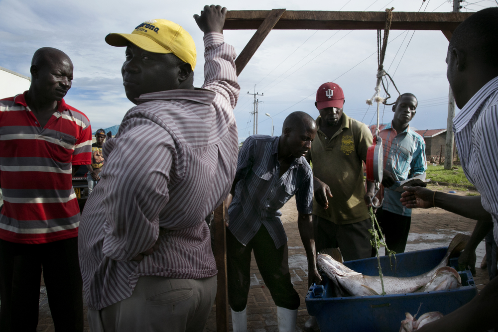 Fish mongers weigh the catch while the tax collector watches.