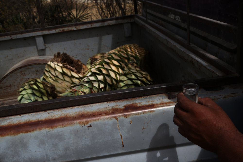 A shot of mezcal after day working of harvesting wild agave in  Mihuatlan, Oaxaca.