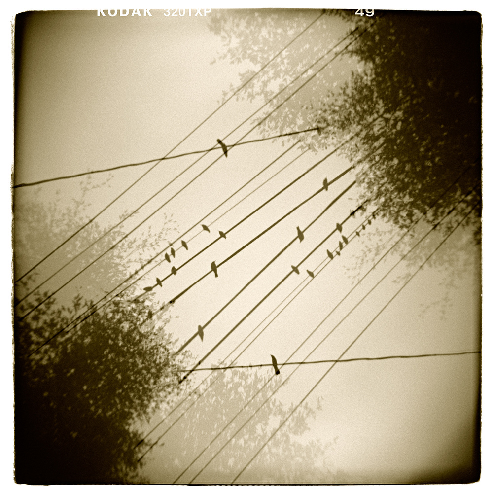 """Avian Etude"" H1494 (In-camera Double Exposure)"
