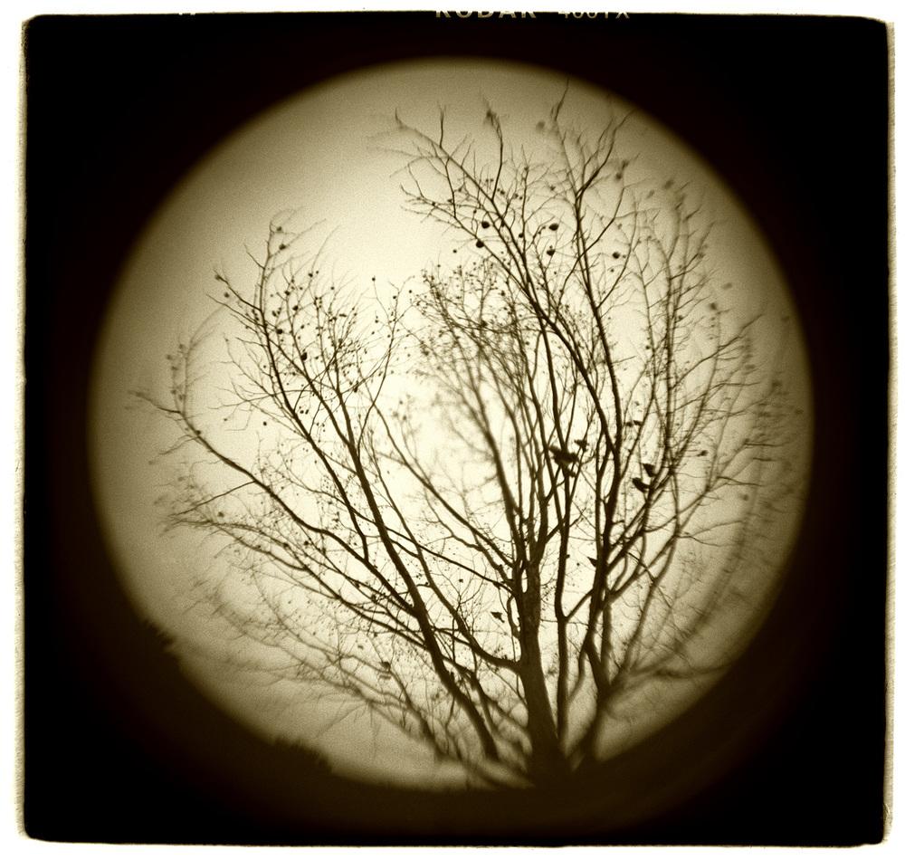 """Tree Study"" H1501"