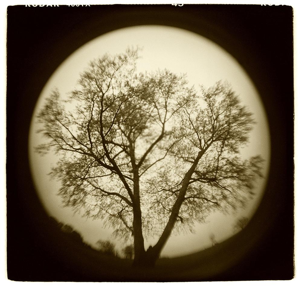 """Tree Study"" H1502"