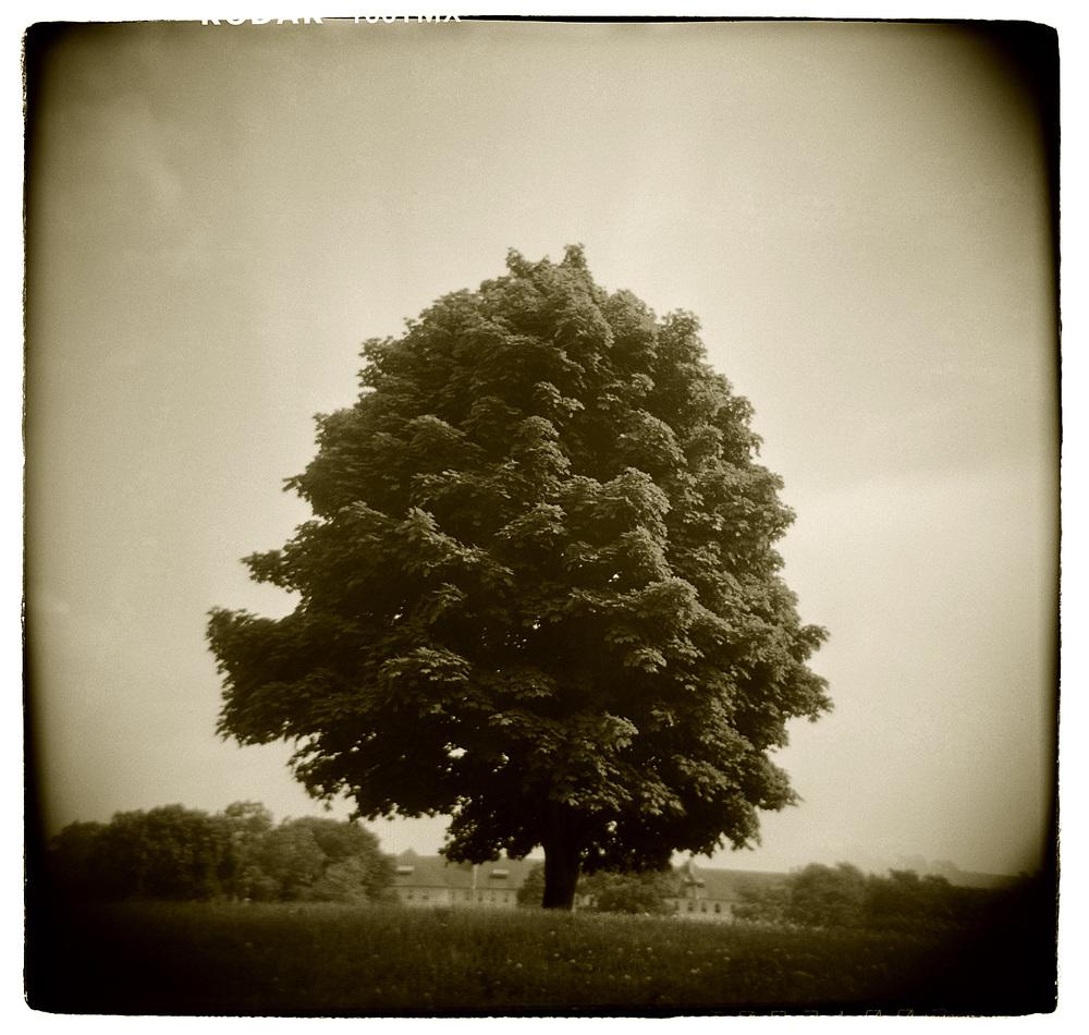 """Tree Study"" H1504"