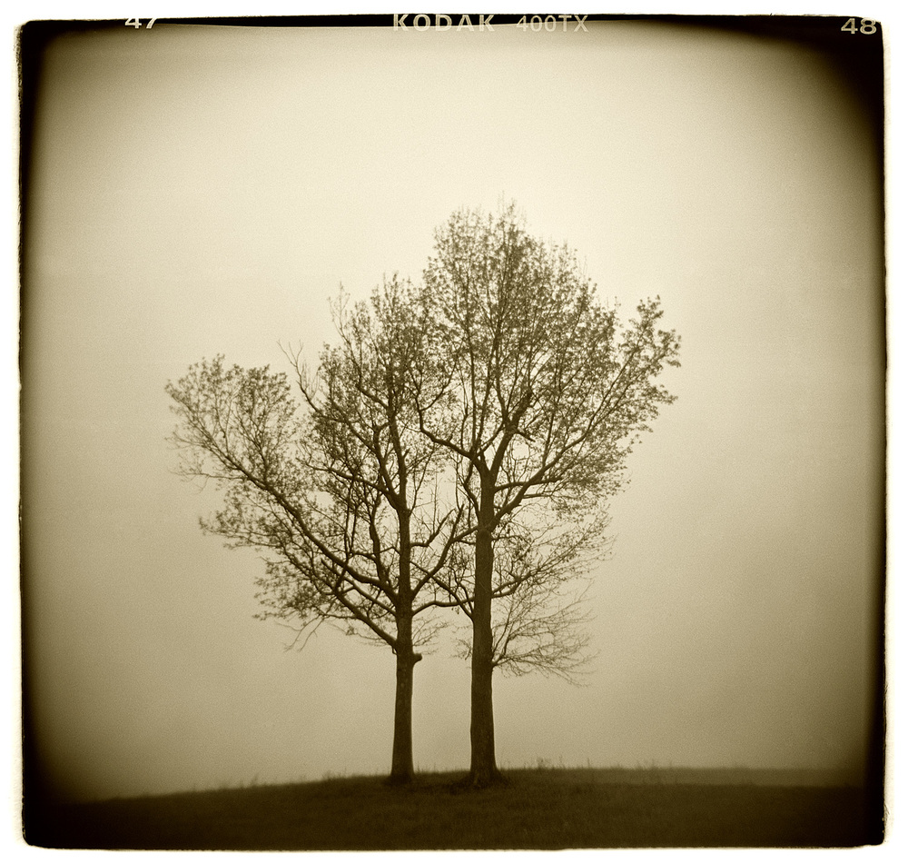 """Tree Study"" H1508"