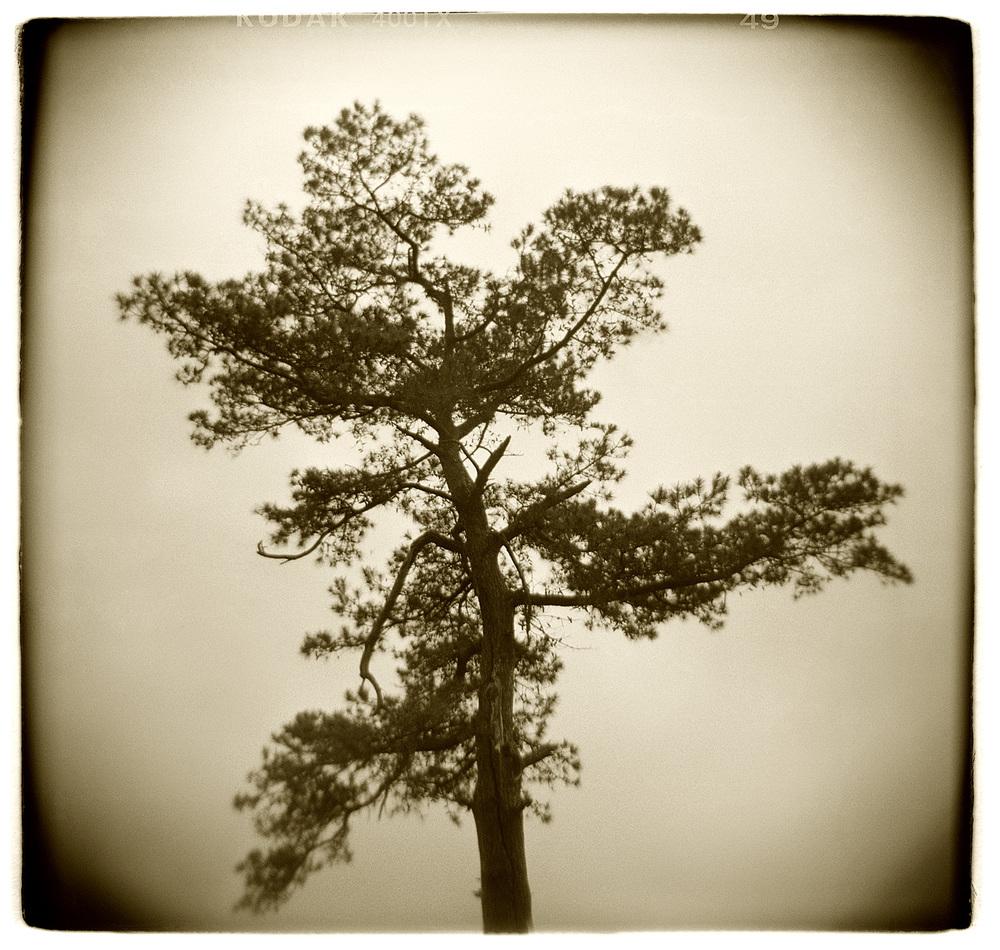 """Tree Study"" H1509"
